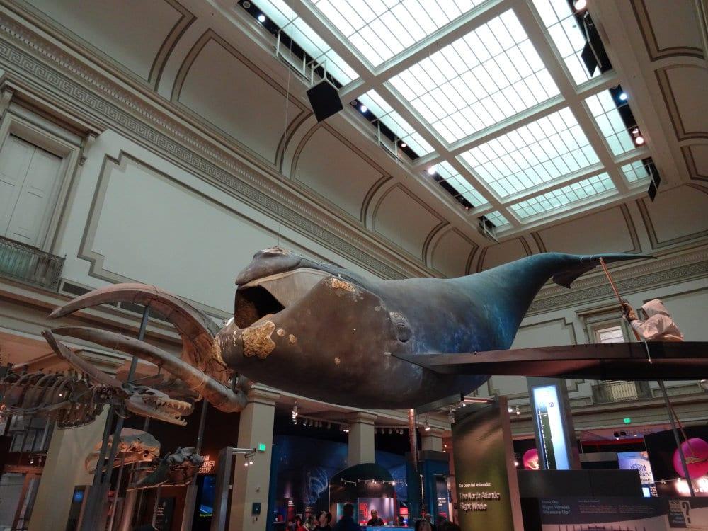 Une baleine dans les airs