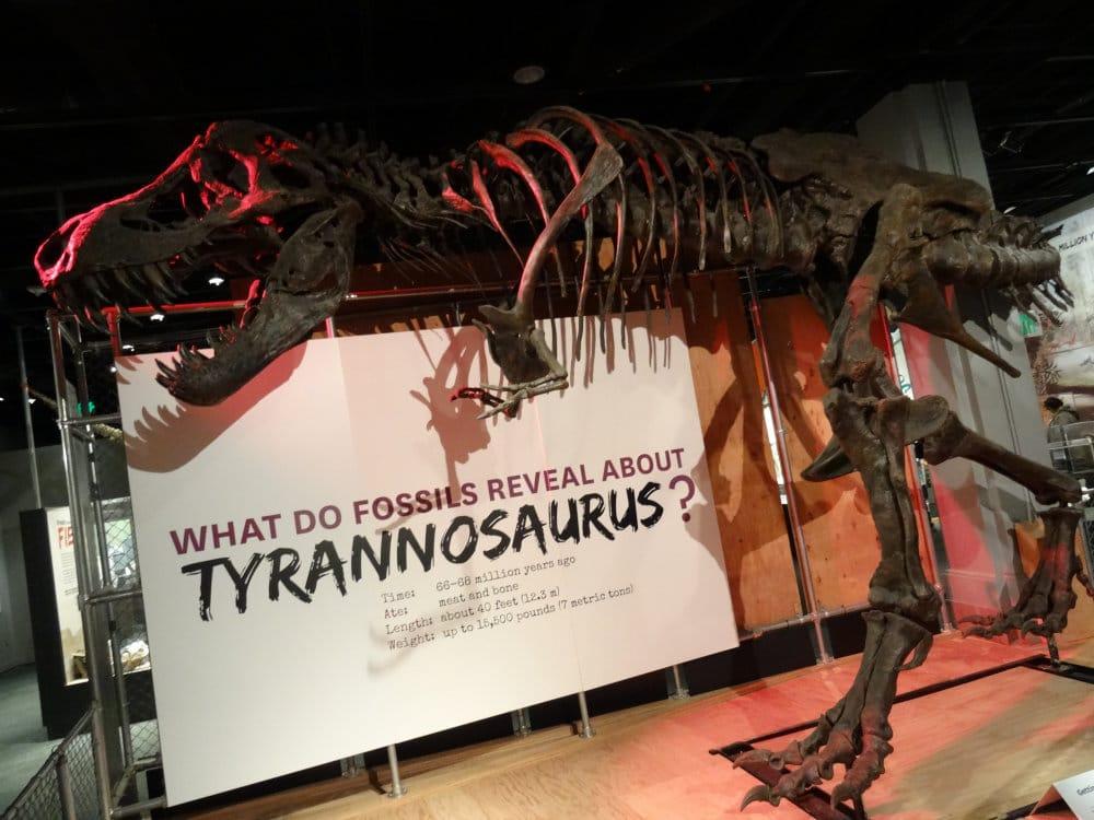 Le T-Rex en pleine chasse