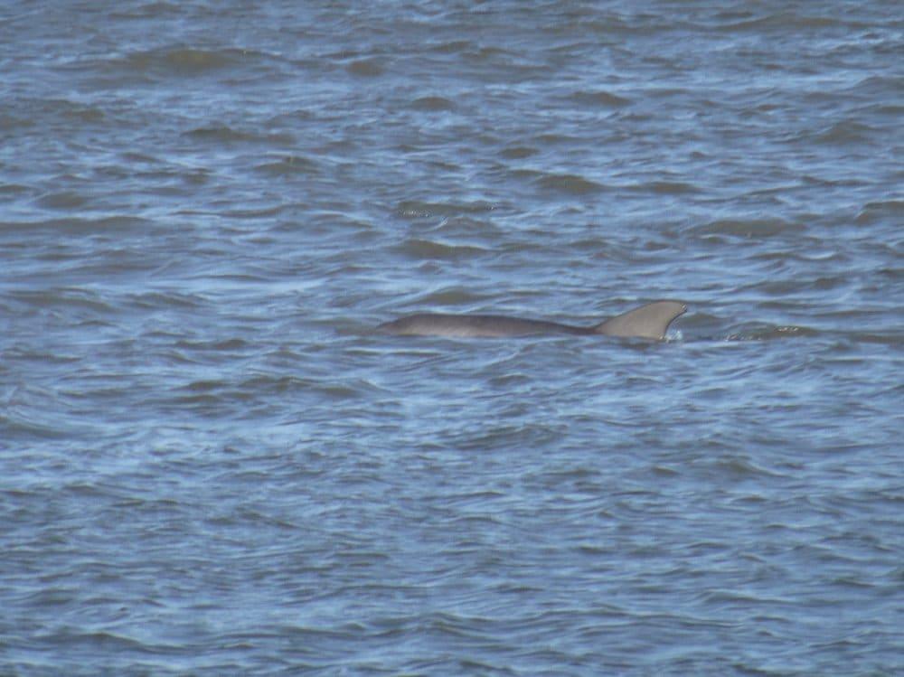 Des dauphins en maraude
