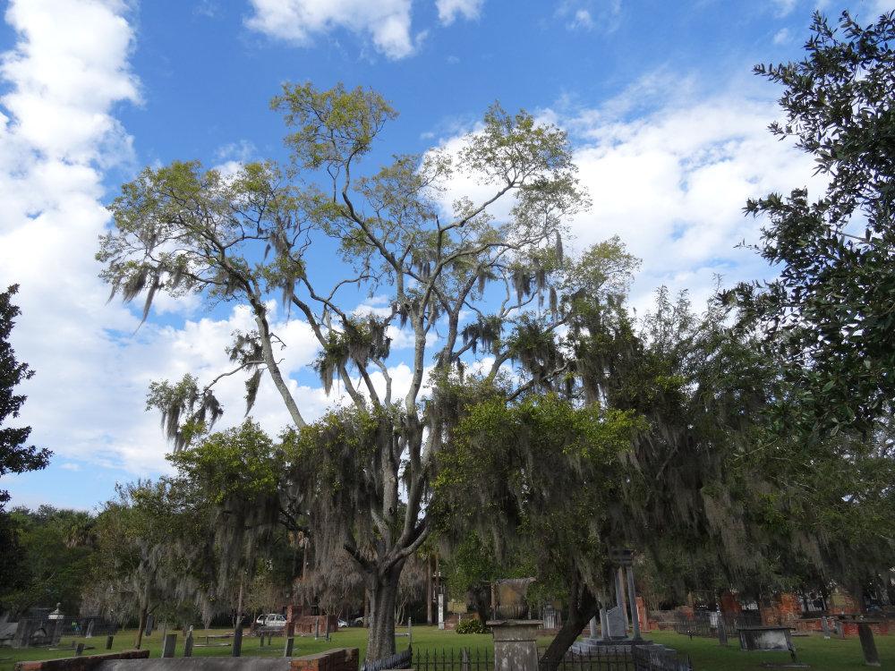 Le cimetière du Colonial Park de Savannah