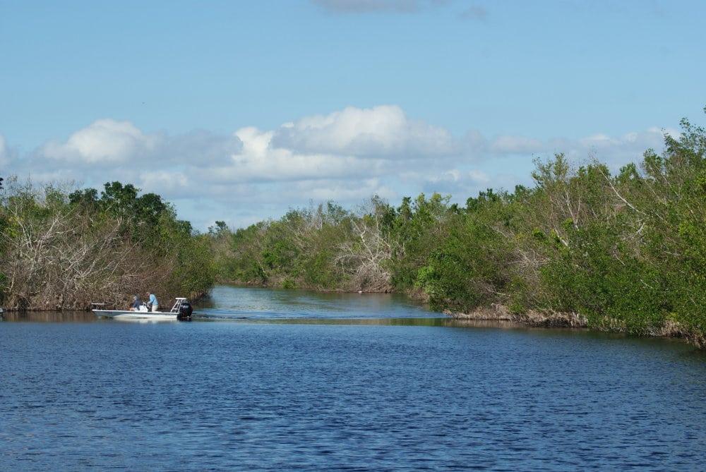Paysage de mangrove