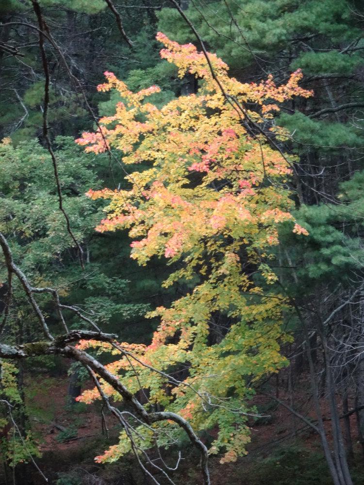 La nature se pare de belles couleurs flamboyantes