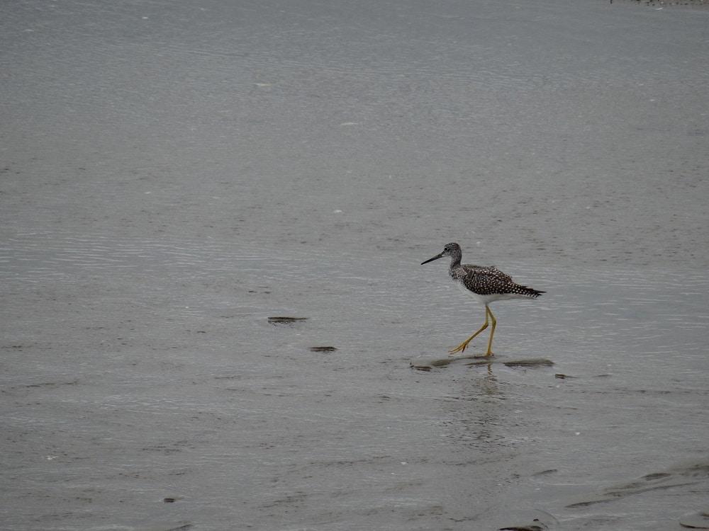 Oiseau et marécage à Kouchibouguac