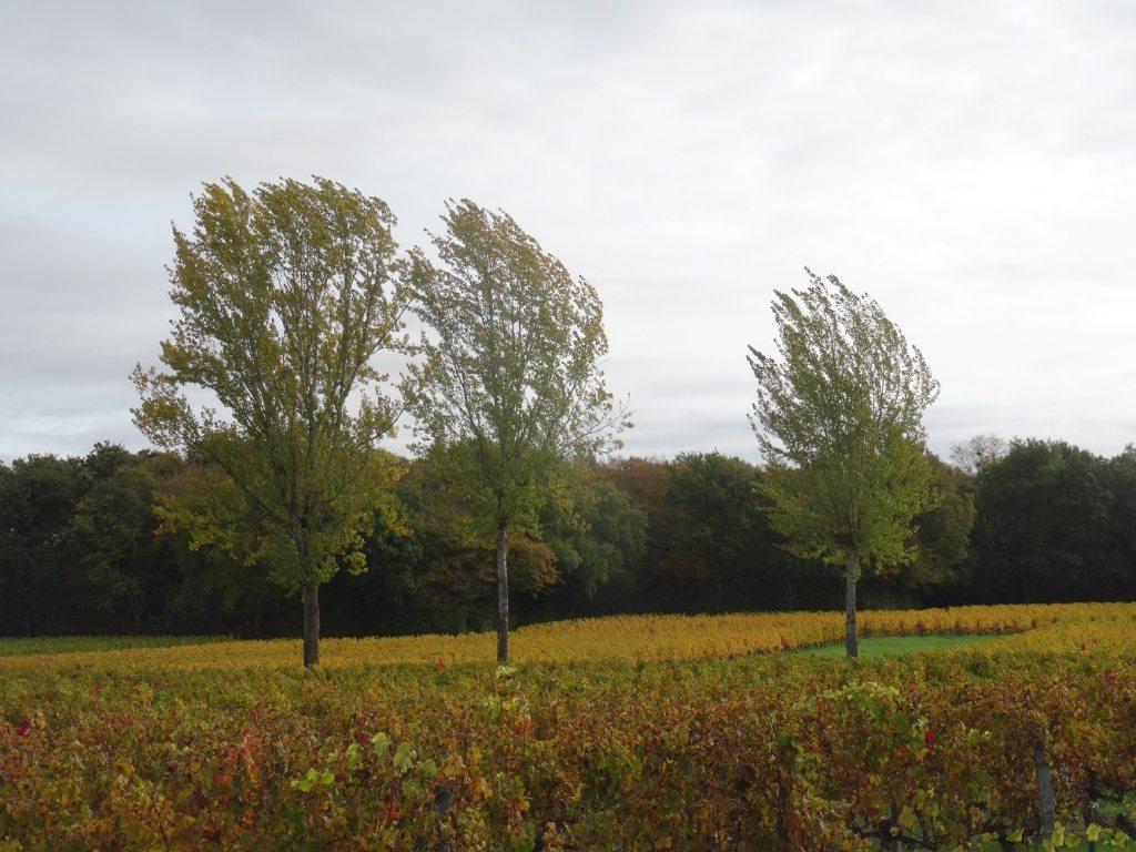 Les vignes à l'automne