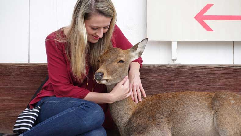 Nara Japan Deer Park - Parenthood and Passports