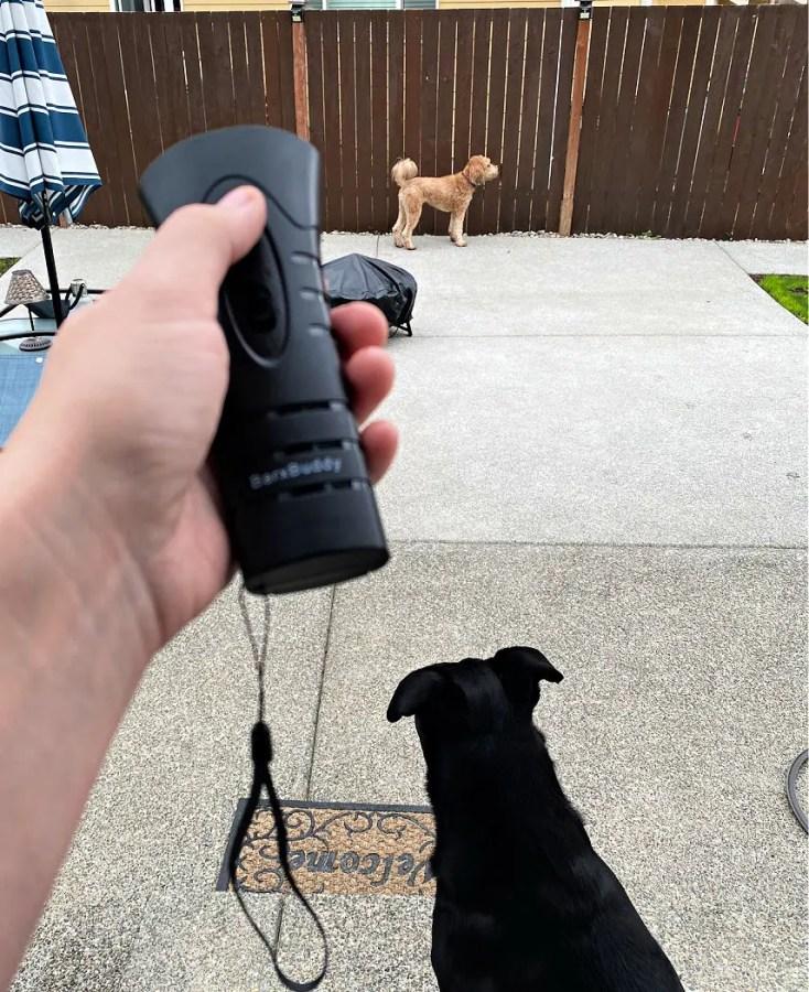 stop barking