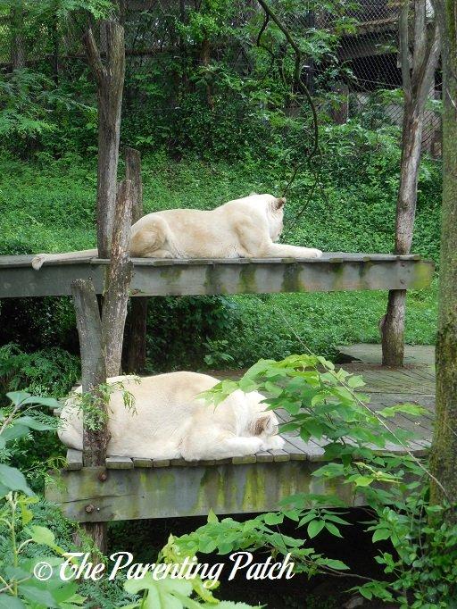 Zoo Lights Coupon