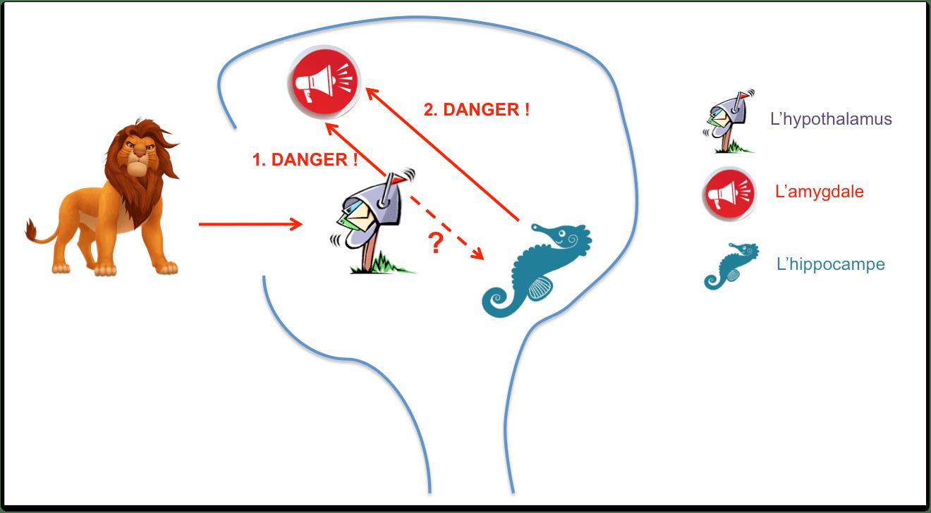 Pourquoi le cerveau de votre enfant stress perd ses for Le stress
