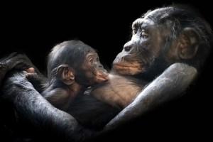 GorillaTalk_ForWeb