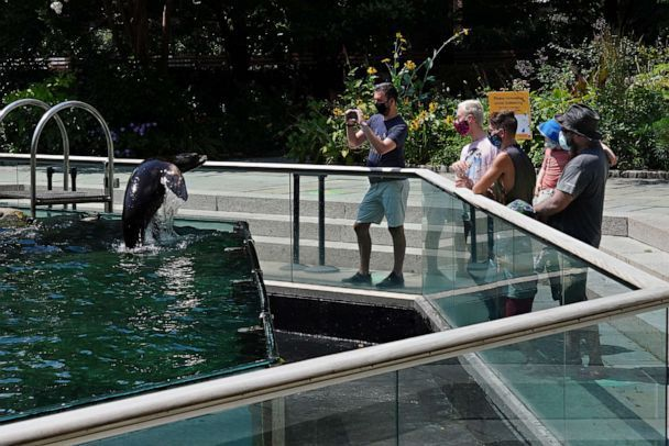 PHOTO: People wearing masks watch a sea lion jumping in a pool at Central Park Zoo as New York City enters Phase 4 of re-opening, following restrictions imposed to slow the spread of the coronavirus, July 20, 2020. (Cindy Ord/Getty Images)