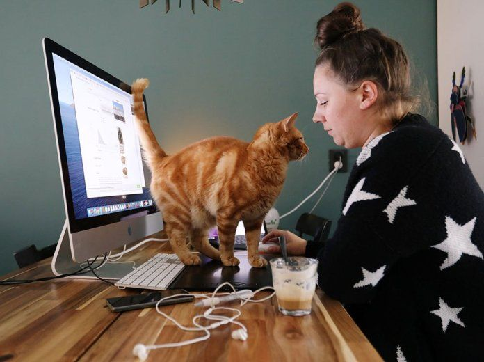 A cat walks at a table of a working woman.