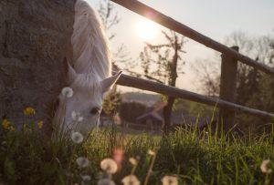 horse, graze, paddock