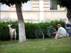 Ale lidi jsou dnes jiní. Do parku si vodí kozy.
