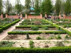 Permakulturní zahrada. Blízkost vybraných plodin pomáhá jejich vzájemné ochraně, hnojení a podporě růstu.