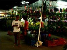 orchid_market_krabi_romana_granatova (22)
