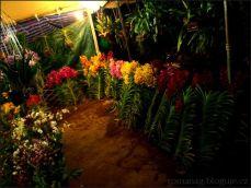orchid_market_krabi_romana_granatova (27)
