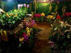 orchid_market_krabi_romana_granatova (4)