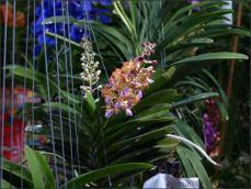 orchid_market_krabi_romana_granatova (40)
