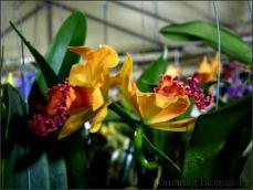 orchid_market_krabi_romana_granatova (44)
