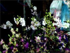 orchid_market_krabi_romana_granatova (45)
