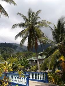 Tioman arbre blog voyage