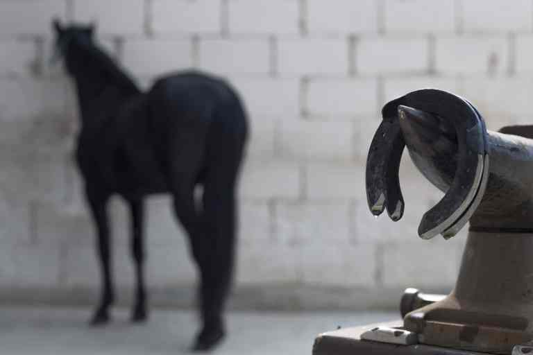 fer à cheval - chevaux déferrés- courses hippiques - turf - pari-gagnant.com