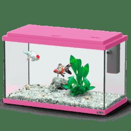 Funny Fish 40