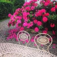 les-rhododendrons-de-notre-jardin