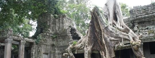 La nature envahie doucement mais sûrement les temples d'Angkor