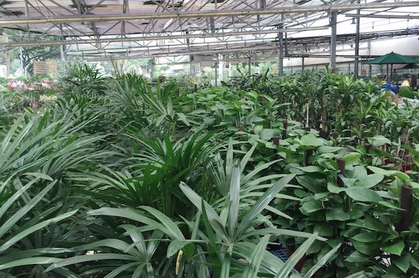 Acheter des plantes a singapour