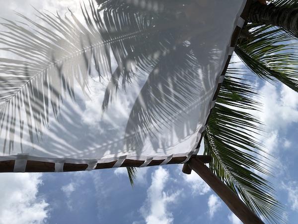 Ciel bleu palmier batam