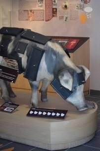 porc corse