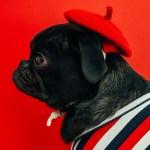 Zwiedzanie Paryża z psem