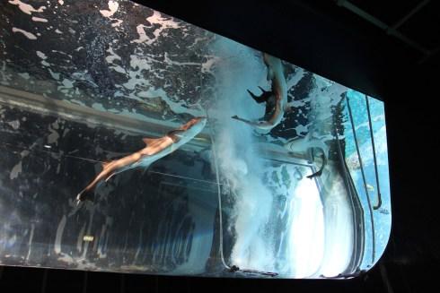 Hakone en Aquarium