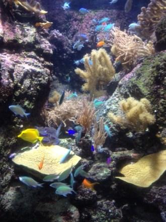 aquarium-paris-coeur-de-corail.6