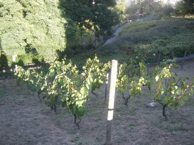 Vignes Bergeyre
