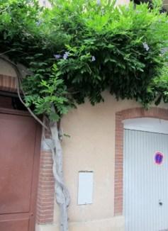 Toulouse la ville rose (49)