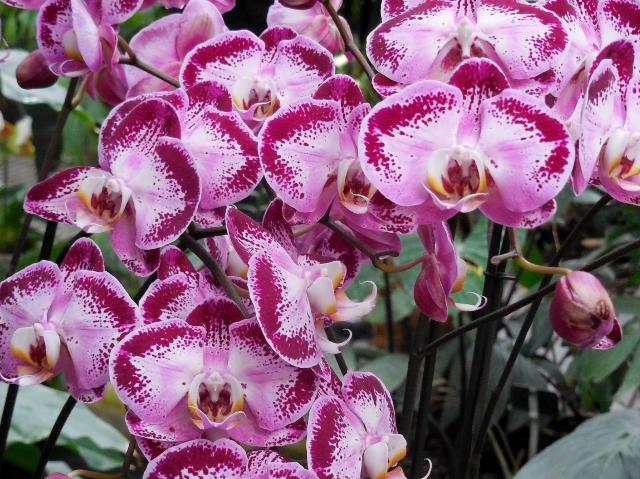 Mille et une orchidées dans Les Grandes Serres du Jardin des Plantes