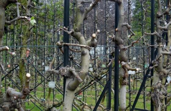 Jardin du Luxembourg - Vignes