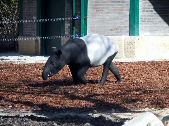 La Ménagerie Le Zoo du Jardin des Plantes (2)