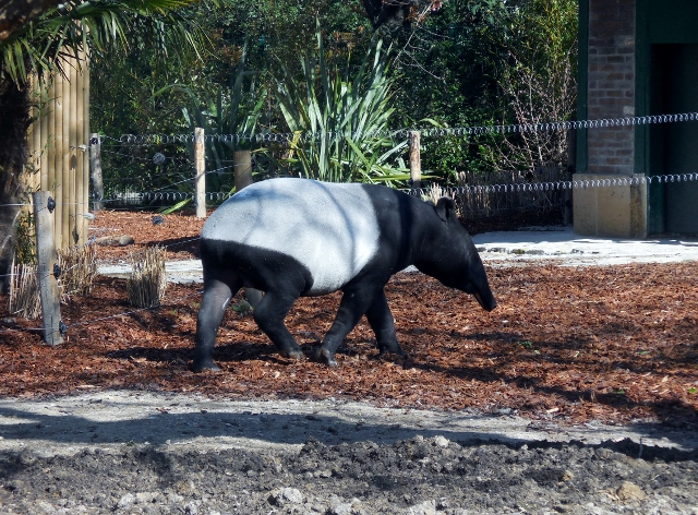 La Ménagerie Le Zoo du Jardin des Plantes (4)