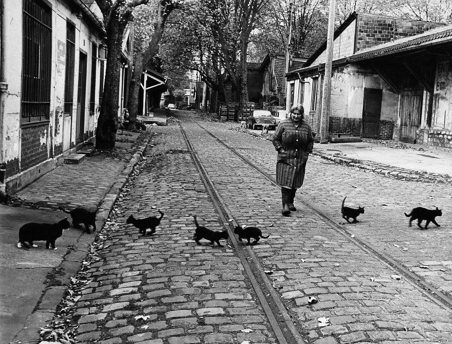 Bercy par Robert Doisneau Les chats de Bercy, Paris 1974 BD
