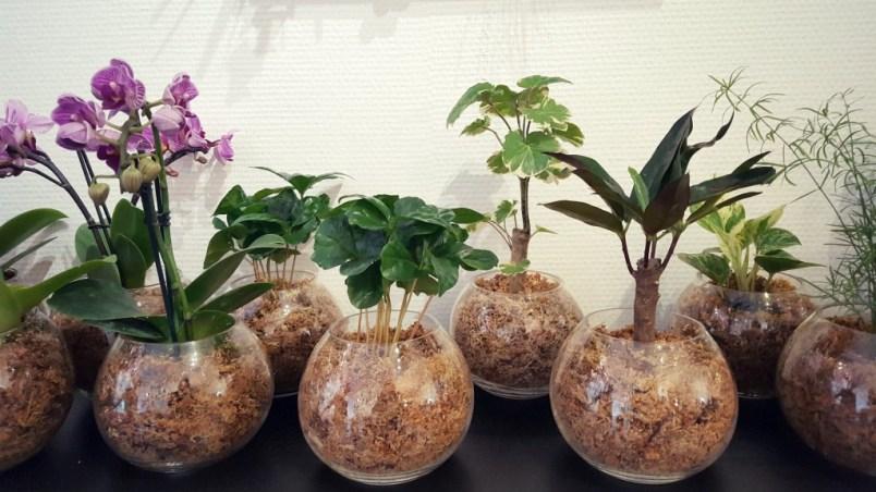 une plante d polluante pour la f te des m res avec boby la plante paris pages blog. Black Bedroom Furniture Sets. Home Design Ideas