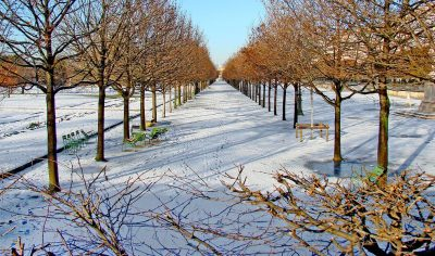 Jardin des Tuileries in Paris during the winter