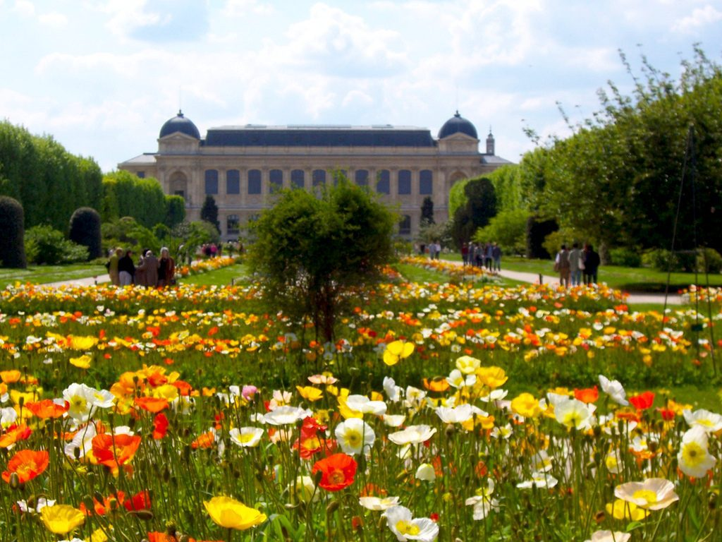 Wild species of poppies cultivated at the Jardin des Plantes in Paris. Paris Sharing/Creative Commons 2.0
