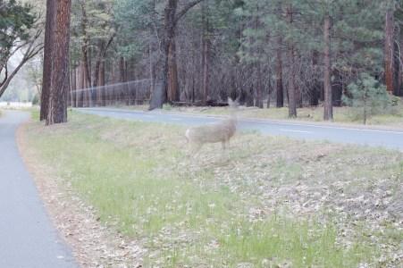 JM150417_Yosemite_034