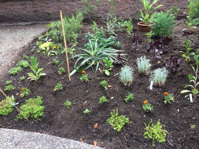 The north bed is planted