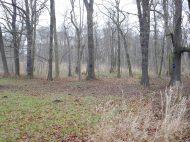 Freigelegter Lyrischer Baumkreis