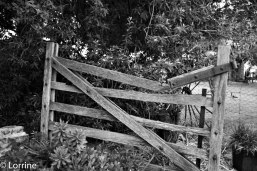 Camera Club Rural Pic Gate IMG_0719 (2)Winner