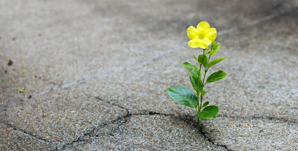 flower hopefully growing out of the ground